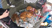 Betim faz testes gratuitos para diagnosticar leishmaniose em cães