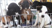 Domingo é dia de adoção de cães e gatos em Betim
