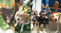 Adote uma Rena: Partage Shopping realiza feira de adoção de animais com temática natalina