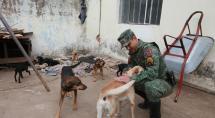 Idoso é denunciado por suspeita de maus-tratos a animais em Betim