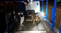 Cão-farejador da PRF localiza cocaína escondida em cegonheira