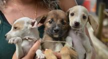 Betim ganha mais um Dia de Adoção de Cães e Gatos